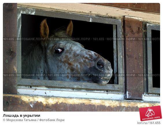 Лошадь в укрытии, фото № 161655, снято 9 июля 2005 г. (c) Морозова Татьяна / Фотобанк Лори