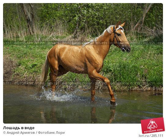 Лошадь в воде, фото № 285111, снято 18 мая 2006 г. (c) Андрей Армягов / Фотобанк Лори