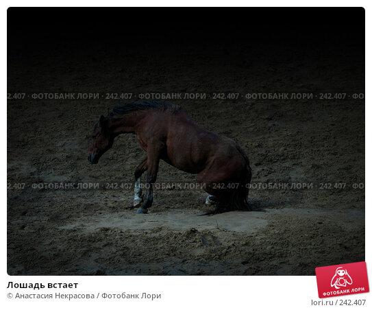 Лошадь встает, фото № 242407, снято 22 сентября 2007 г. (c) Анастасия Некрасова / Фотобанк Лори