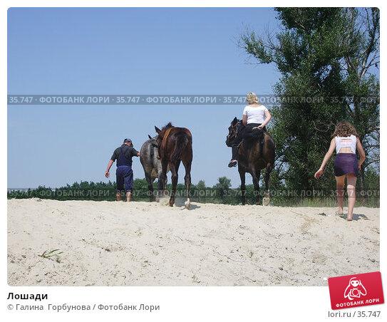 Купить «Лошади», фото № 35747, снято 23 июля 2005 г. (c) Галина  Горбунова / Фотобанк Лори