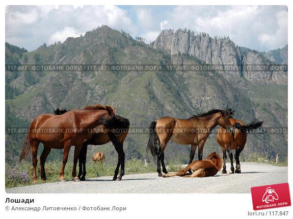 Купить «Лошади», фото № 117847, снято 3 августа 2007 г. (c) Александр Литовченко / Фотобанк Лори