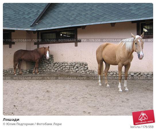 Купить «Лошади», фото № 179559, снято 29 июля 2006 г. (c) Юлия Селезнева / Фотобанк Лори