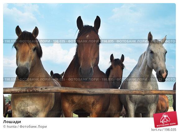 Лошади, фото № 198035, снято 14 июня 2007 г. (c) hunta / Фотобанк Лори