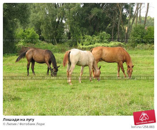 Купить «Лошади на лугу», фото № 258883, снято 17 августа 2006 г. (c) Лилия / Фотобанк Лори