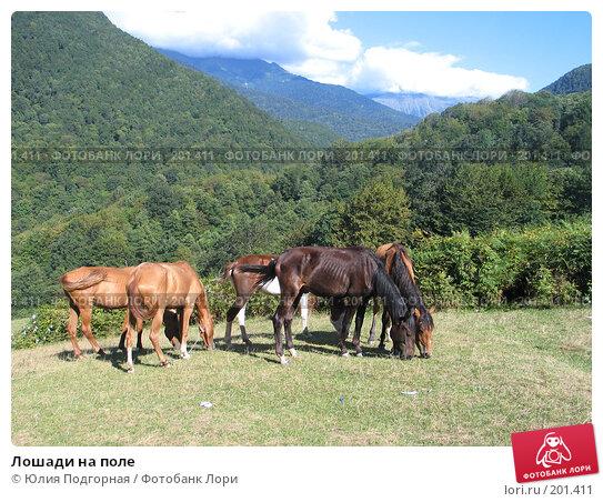Купить «Лошади на поле», фото № 201411, снято 8 сентября 2006 г. (c) Юлия Селезнева / Фотобанк Лори
