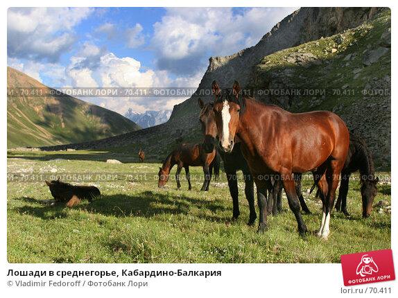 Лошади в среднегорье, Кабардино-Балкария, фото № 70411, снято 21 июля 2007 г. (c) Vladimir Fedoroff / Фотобанк Лори