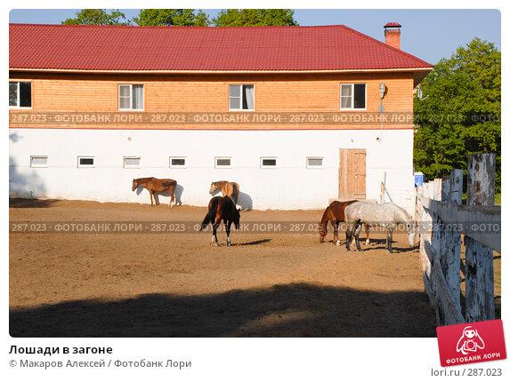 Лошади в загоне, фото № 287023, снято 11 мая 2008 г. (c) Макаров Алексей / Фотобанк Лори