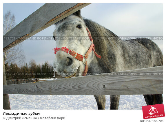 Лошадиные зубки, фото № 183703, снято 19 января 2008 г. (c) Дмитрий Лемешко / Фотобанк Лори