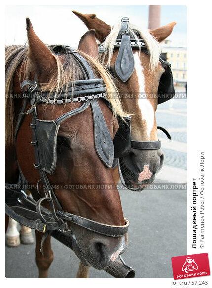 Лошадиный портрет, фото № 57243, снято 25 июня 2007 г. (c) Parmenov Pavel / Фотобанк Лори