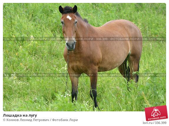 Лошадка на лугу, фото № 336399, снято 26 июня 2008 г. (c) Коннов Леонид Петрович / Фотобанк Лори