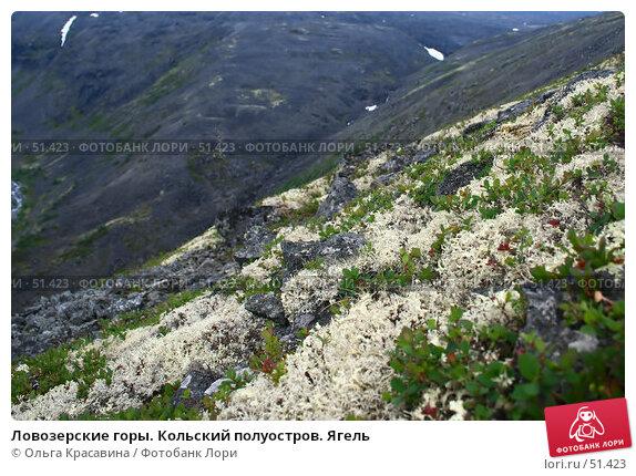 Ловозерские горы. Кольский полуостров. Ягель, фото № 51423, снято 7 июля 2006 г. (c) Ольга Красавина / Фотобанк Лори