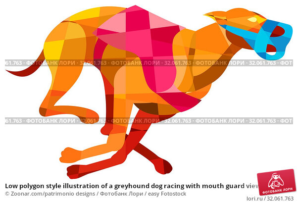 Low polygon style illustration of a greyhound dog racing with mouth guard viewed from the side set on isolated white background. Стоковое фото, фотограф Zoonar.com/patrimonio designs / easy Fotostock / Фотобанк Лори