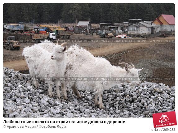 Любопытные козлята на строительстве дороги в деревне, фото № 269283, снято 2 мая 2008 г. (c) Архипова Мария / Фотобанк Лори