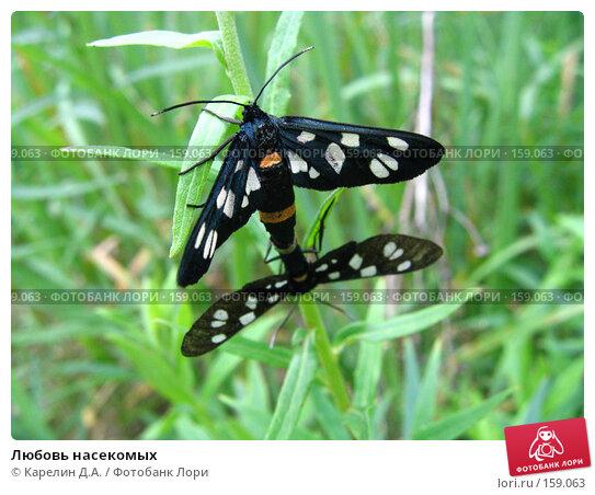 Любовь насекомых, фото № 159063, снято 7 июля 2007 г. (c) Карелин Д.А. / Фотобанк Лори