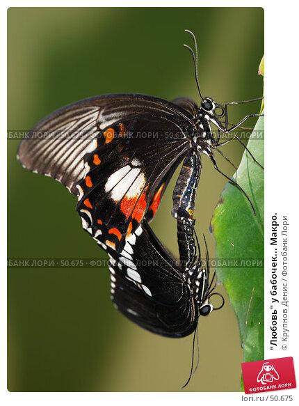 """""""Любовь"""" у бабочек... Макро., фото № 50675, снято 7 мая 2007 г. (c) Крупнов Денис / Фотобанк Лори"""