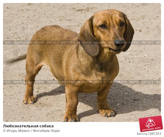 Любознательная собака, фото № 291511, снято 18 апреля 2008 г. (c) Игорь Момот / Фотобанк Лори
