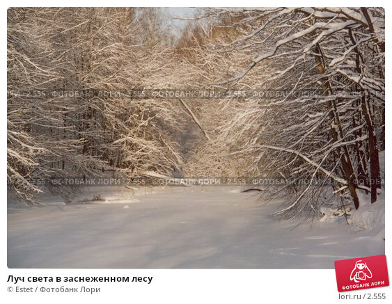 Луч света в заснеженном лесу, фото № 2555, снято 24 марта 2017 г. (c) Estet / Фотобанк Лори
