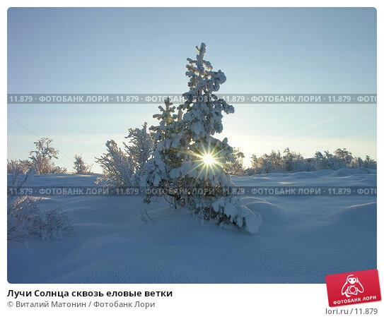 Лучи Солнца сквозь еловые ветки, фото № 11879, снято 2 ноября 2006 г. (c) Виталий Матонин / Фотобанк Лори