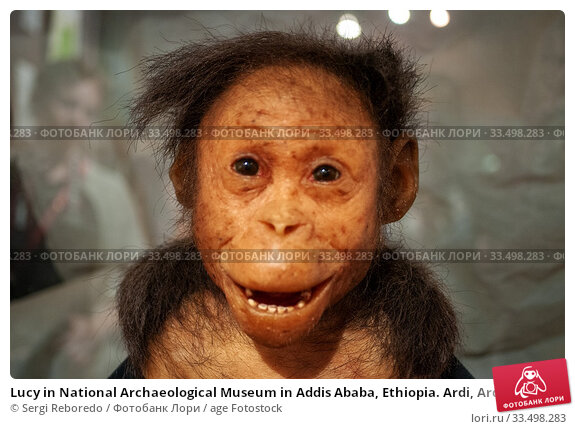 Lucy in National Archaeological Museum in Addis Ababa, Ethiopia. Ardi, Ardipithecus ramidus, replica of 4. 4 million old ancestor, National Museum of Ethiopia, Addis Ababa, Ethiopia. (2020 год). Редакционное фото, фотограф Sergi Reboredo / age Fotostock / Фотобанк Лори