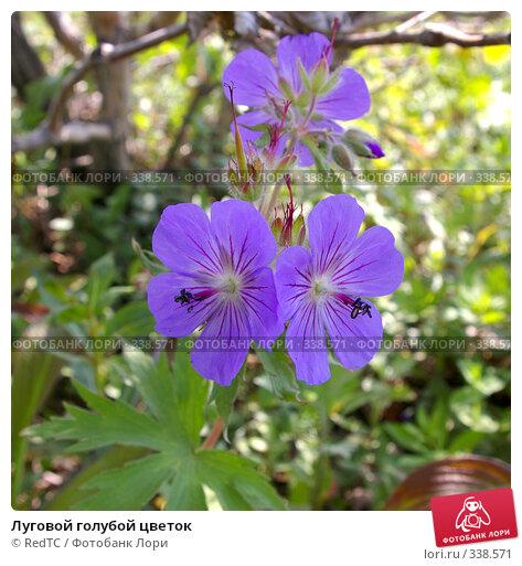 Луговой голубой цветок, фото № 338571, снято 26 июня 2008 г. (c) RedTC / Фотобанк Лори