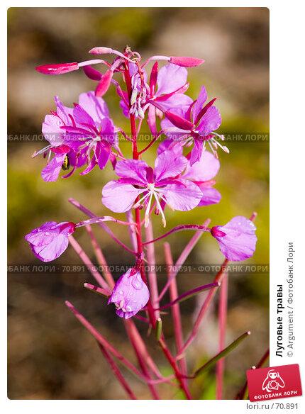 Луговые травы, фото № 70891, снято 1 августа 2007 г. (c) Argument / Фотобанк Лори