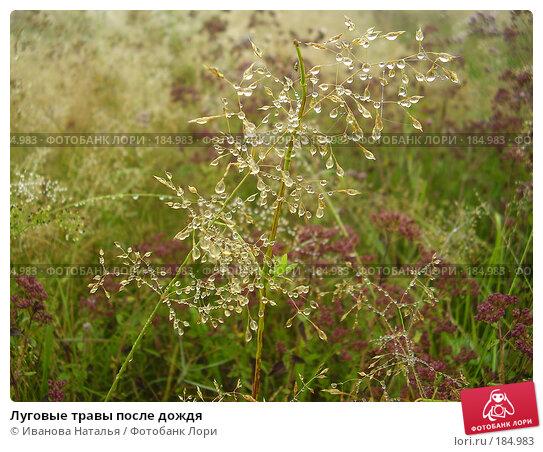 Луговые травы после дождя, фото № 184983, снято 16 августа 2007 г. (c) Иванова Наталья / Фотобанк Лори