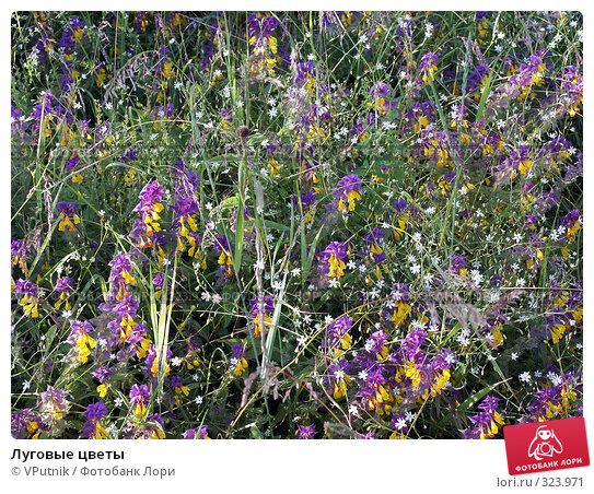 Луговые цветы, фото № 323971, снято 9 июля 2004 г. (c) VPutnik / Фотобанк Лори