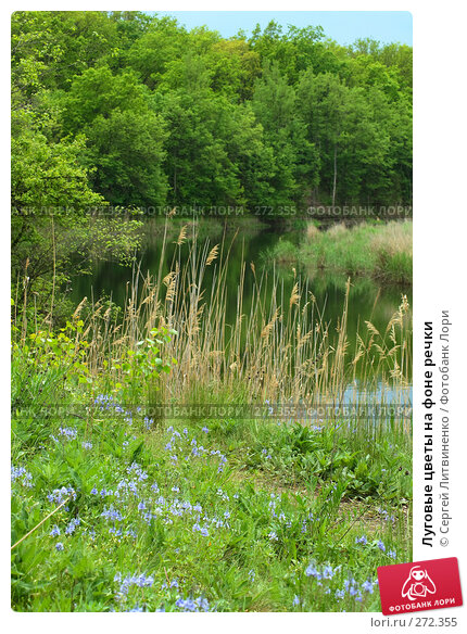 Купить «Луговые цветы на фоне речки», фото № 272355, снято 3 мая 2008 г. (c) Сергей Литвиненко / Фотобанк Лори