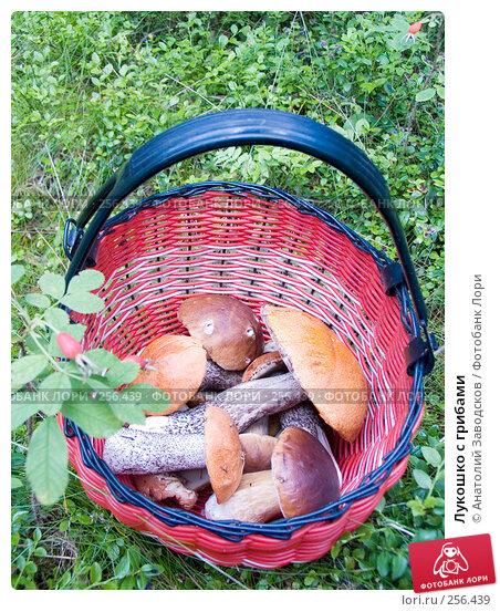 Лукошко с грибами, фото № 256439, снято 30 июля 2006 г. (c) Анатолий Заводсков / Фотобанк Лори