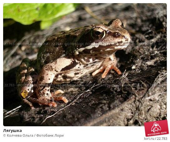 Лягушка, фото № 22783, снято 17 июня 2006 г. (c) Колчева Ольга / Фотобанк Лори