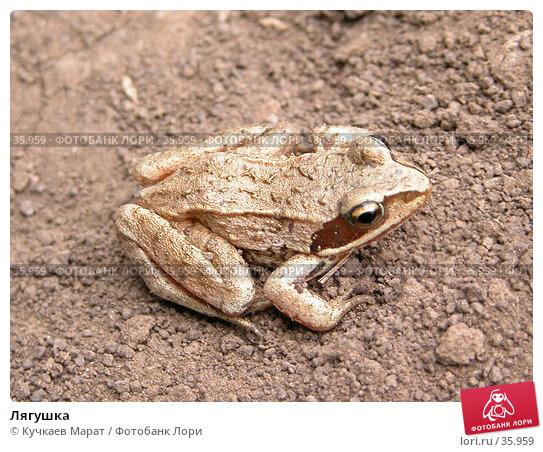 Лягушка, фото № 35959, снято 10 июня 2006 г. (c) Кучкаев Марат / Фотобанк Лори