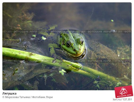 Лягушка, фото № 137351, снято 12 июня 2005 г. (c) Морозова Татьяна / Фотобанк Лори