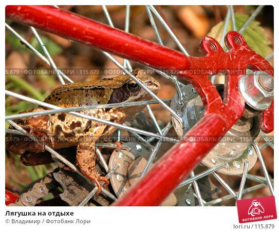 Лягушка на отдыхе, фото № 115879, снято 1 сентября 2002 г. (c) Владимир / Фотобанк Лори