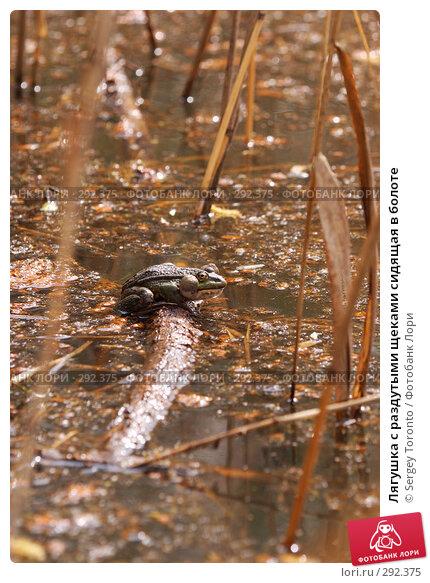 Лягушка с раздутыми щеками сидящая в болоте, фото № 292375, снято 9 мая 2008 г. (c) Sergey Toronto / Фотобанк Лори