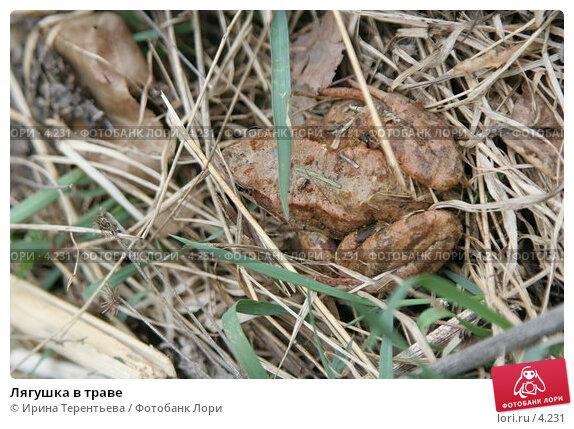 Купить «Лягушка в траве», эксклюзивное фото № 4231, снято 8 мая 2006 г. (c) Ирина Терентьева / Фотобанк Лори