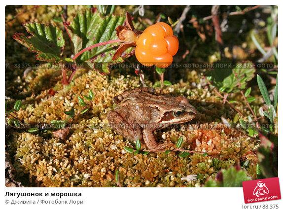 Лягушонок и морошка, фото № 88375, снято 2 августа 2007 г. (c) Дживита / Фотобанк Лори
