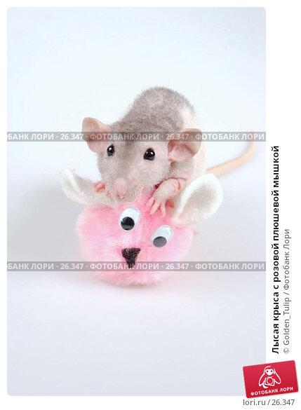 Лысая крыса c розовой плюшевой мышкой, фото № 26347, снято 18 марта 2007 г. (c) Golden_Tulip / Фотобанк Лори
