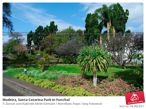 Madeira, Santa Catarina Park in Funchal. Стоковое фото, фотограф Zoonar.com/Gabriele Sitnik-Schmach / easy Fotostock / Фотобанк Лори