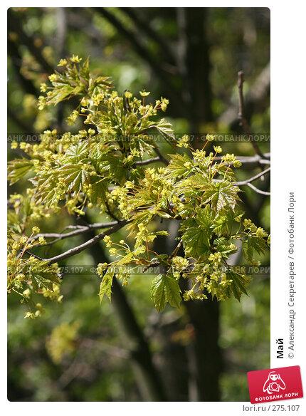 Май, фото № 275107, снято 13 мая 2007 г. (c) Александр Секретарев / Фотобанк Лори