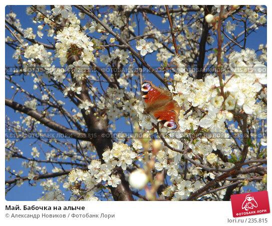 Купить «Май. Бабочка на алыче», фото № 235815, снято 16 апреля 2007 г. (c) Александр Новиков / Фотобанк Лори