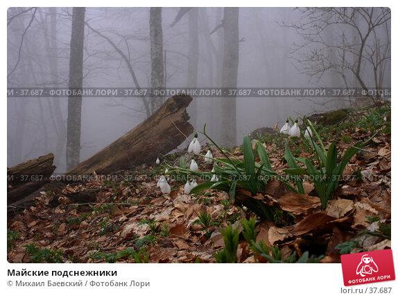 Майские подснежники, фото № 37687, снято 1 мая 2007 г. (c) Михаил Баевский / Фотобанк Лори