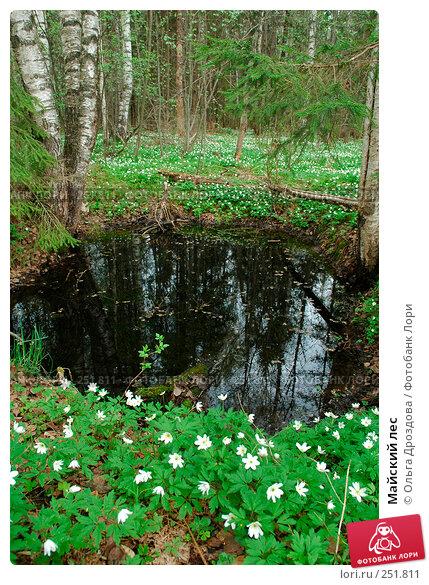 Майский лес, фото № 251811, снято 9 мая 2005 г. (c) Ольга Дроздова / Фотобанк Лори