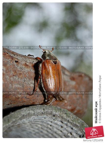 Майский жук, фото № 272619, снято 1 мая 2008 г. (c) Елена Гордеева / Фотобанк Лори