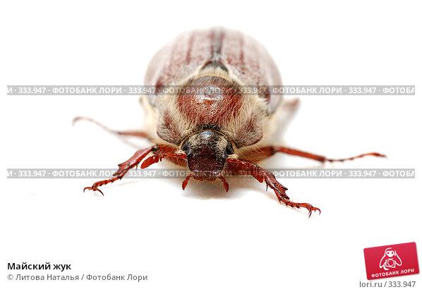 Майский жук, фото № 333947, снято 1 июня 2008 г. (c) Литова Наталья / Фотобанк Лори