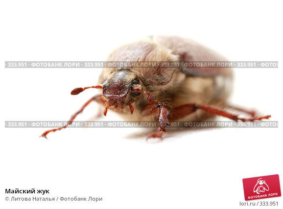 Майский жук, фото № 333951, снято 1 июня 2008 г. (c) Литова Наталья / Фотобанк Лори