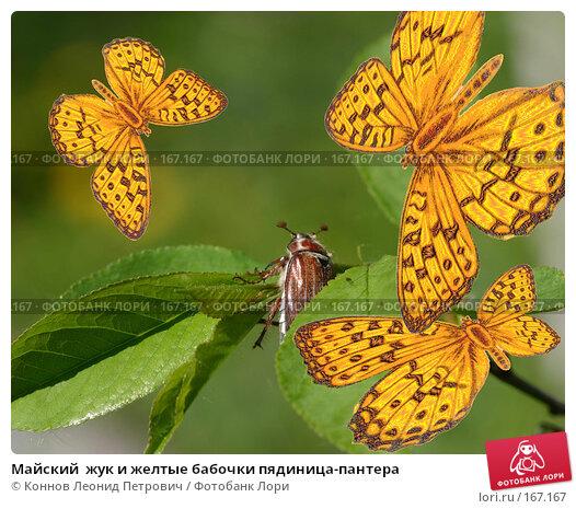 Майский  жук и желтые бабочки пядиница-пантера, иллюстрация № 167167 (c) Коннов Леонид Петрович / Фотобанк Лори