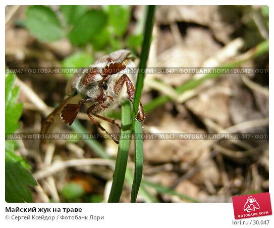 Майский жук на траве, фото № 30047, снято 27 мая 2006 г. (c) Сергей Ксейдор / Фотобанк Лори