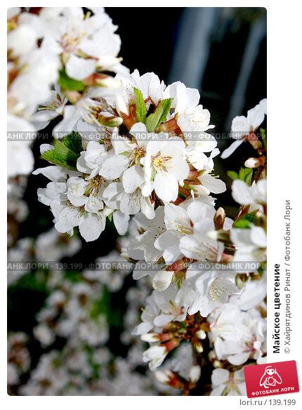 Майское цветение, фото № 139199, снято 16 мая 2007 г. (c) Хайрятдинов Ринат / Фотобанк Лори