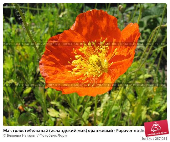 Купить «Мак голостебельный (исландский мак) оранжевый - Papaver nudicaule», фото № 287031, снято 13 июля 2006 г. (c) Беляева Наталья / Фотобанк Лори