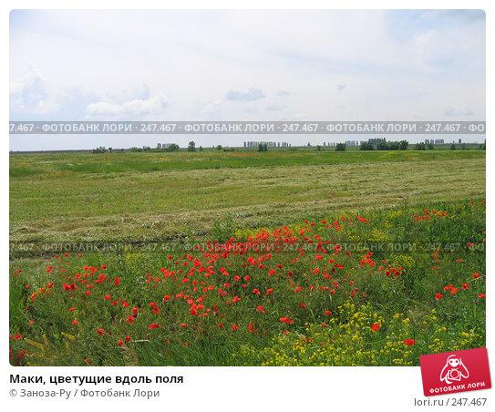 Маки, цветущие вдоль поля, фото № 247467, снято 28 мая 2006 г. (c) Заноза-Ру / Фотобанк Лори